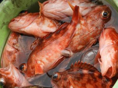 釣具の海友の2019年3月2日(土)1枚目の写真
