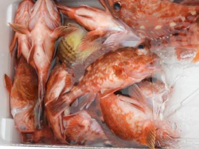 釣具の海友の2019年3月2日(土)2枚目の写真