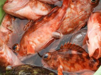 釣具の海友の2019年3月2日(土)4枚目の写真
