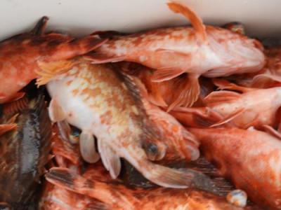 釣具の海友の2019年3月2日(土)5枚目の写真
