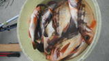 太政丸の2019年3月9日(土)3枚目の写真