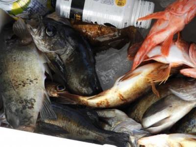 釣具の海友の2019年3月9日(土)4枚目の写真
