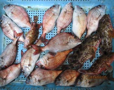 奥村釣船の2019年3月15日(金)4枚目の写真