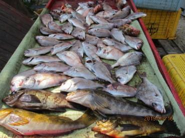 奥村釣船の2019年3月16日(土)3枚目の写真