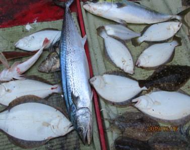 奥村釣船の2019年3月16日(土)4枚目の写真