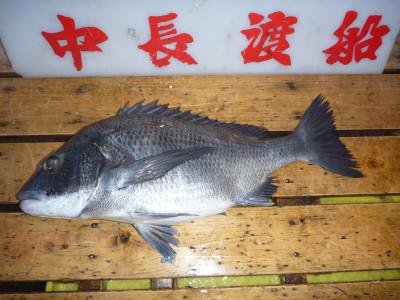 中長渡船の2019年3月18日(月)2枚目の写真