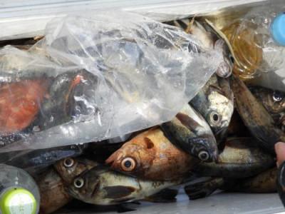釣具の海友の2019年3月18日(月)2枚目の写真
