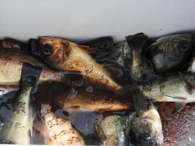 釣具の海友の2019年3月18日(月)3枚目の写真