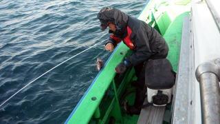 太政丸の2019年3月20日(水)2枚目の写真