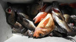 太政丸の2019年3月20日(水)3枚目の写真