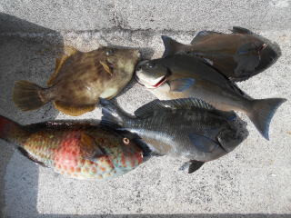 弁天丸の2019年3月23日(土)2枚目の写真