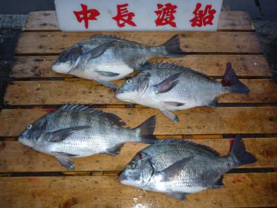 中長渡船の2019年3月27日(水)1枚目の写真
