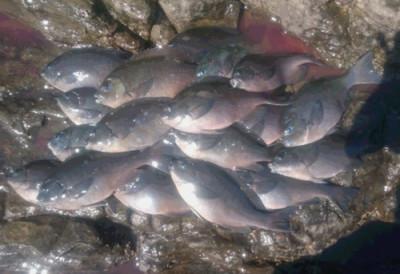 蝶栄丸の2019年3月15日(金)1枚目の写真