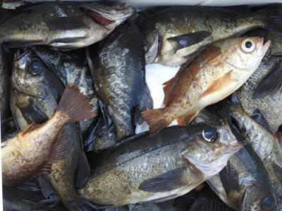 釣具の海友の2019年3月23日(土)3枚目の写真