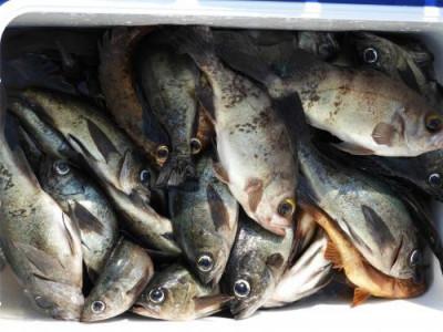 釣具の海友の2019年3月23日(土)5枚目の写真