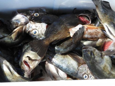 釣具の海友の2019年3月24日(日)3枚目の写真