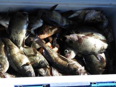 釣具の海友の2019年3月24日(日)4枚目の写真