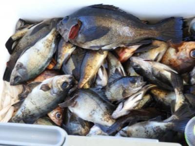 釣具の海友の2019年3月24日(日)5枚目の写真