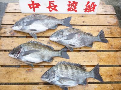 中長渡船の2019年3月29日(金)3枚目の写真