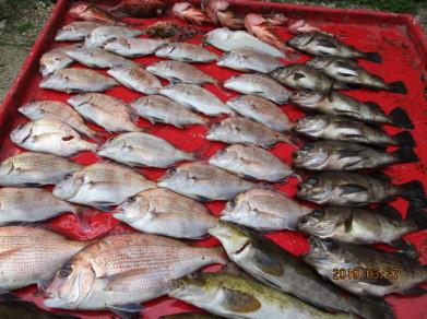 奥村釣船の2019年3月27日(水)3枚目の写真