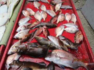 奥村釣船の2019年3月29日(金)4枚目の写真