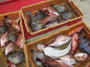 奥村釣船の2019年3月29日(金)5枚目の写真