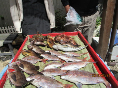 奥村釣船の2019年3月31日(日)4枚目の写真