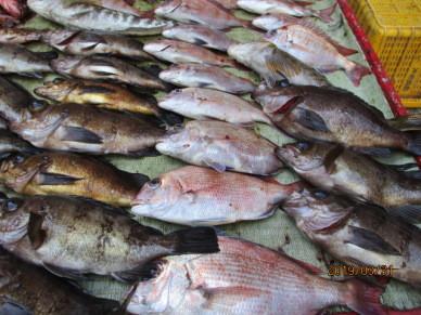 奥村釣船の2019年3月31日(日)5枚目の写真