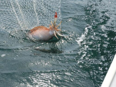釣具の海友の2019年3月30日(土)3枚目の写真