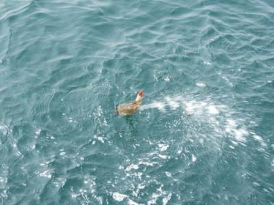 釣具の海友の2019年3月30日(土)4枚目の写真