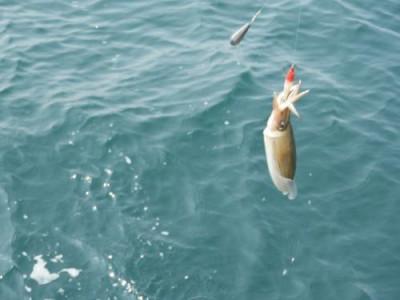 釣具の海友の2019年3月30日(土)5枚目の写真