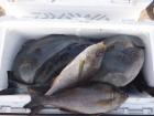 丸銀釣りセンターの2019年3月27日(水)4枚目の写真