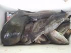 丸銀釣りセンターの2019年3月29日(金)2枚目の写真