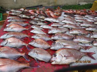 奥村釣船の2019年4月5日(金)4枚目の写真