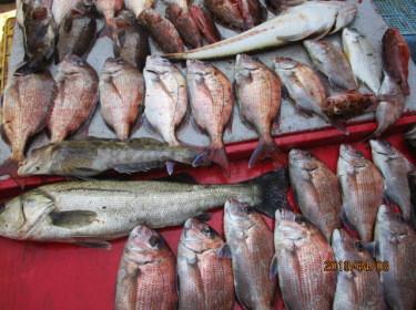 奥村釣船の2019年4月8日(月)4枚目の写真
