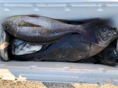 土肥釣りセンターの2019年4月12日(金)1枚目の写真