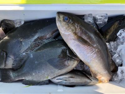 土肥釣りセンターの2019年4月12日(金)2枚目の写真