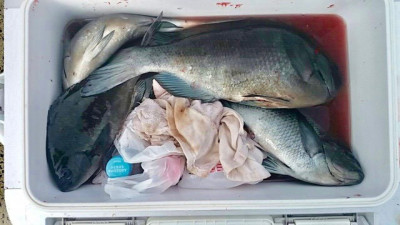 土肥釣りセンターの2019年4月13日(土)2枚目の写真