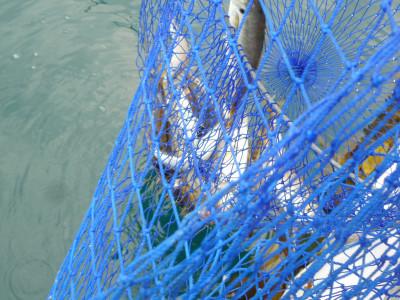 由良海つり公園&釣堀ランドの2019年4月17日(水)2枚目の写真