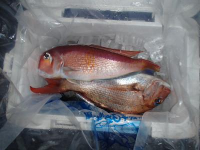 魚磯丸の2019年4月17日(水)1枚目の写真