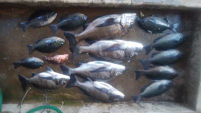 河村渡船の2019年4月18日(木)1枚目の写真