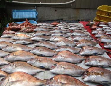 奥村釣船の2019年4月18日(木)4枚目の写真