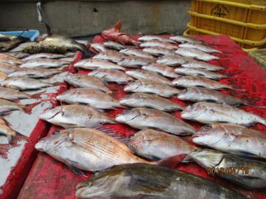 奥村釣船の2019年4月19日(金)5枚目の写真