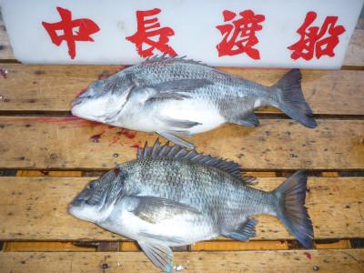 中長渡船の2019年4月20日(土)2枚目の写真