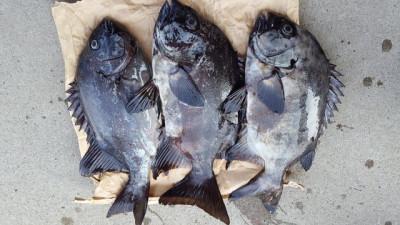 乙島丸の2019年4月8日(月)2枚目の写真