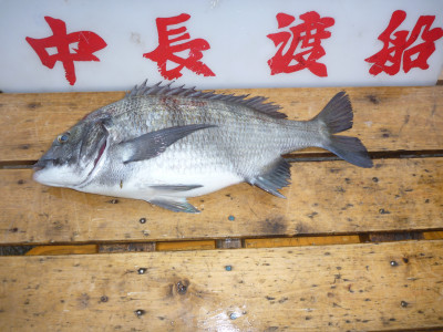 中長渡船の2019年4月24日(水)3枚目の写真