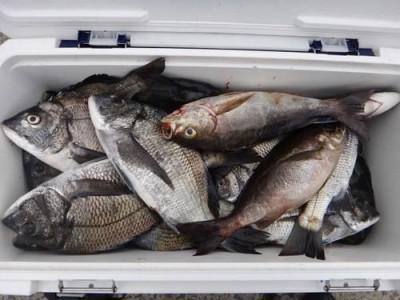 丸銀釣りセンターの2019年4月25日(木)3枚目の写真