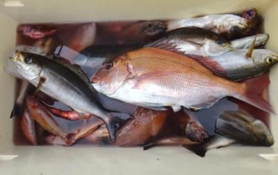 丸銀釣りセンターの2019年4月22日(月)5枚目の写真