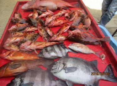 奥村釣船の2019年5月3日(金)4枚目の写真
