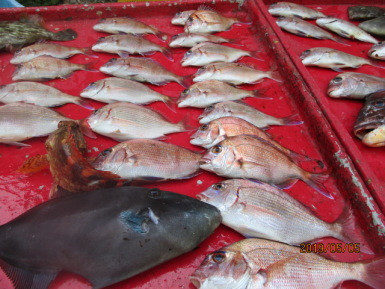 奥村釣船の2019年5月5日(日)4枚目の写真
